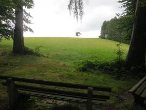 Ausblick im Odenwald