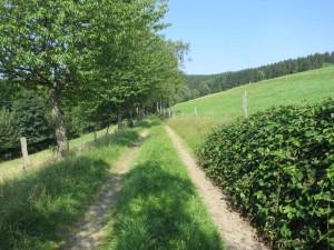 Einsames, liebliches Dambachtal